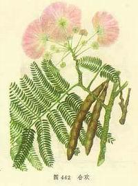 合欢花/来源为豆科植物合欢Albizzia julibrissin Durazz.的花序。