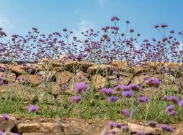 宝宝过节要预防的疾病