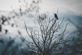 珍珠粉祛痘方法详解