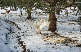 春季怎么养生可避免旧疾复发