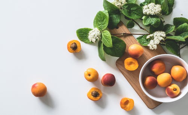 槐花拌醋能够治疗慢性咽炎?