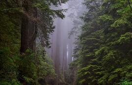 春天皮肤瘙痒的原因