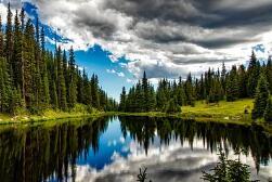 中医图谱之中药——金花草,治风热感冒离不开它