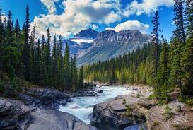 卡尼尔裸妆植物系列