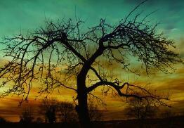 女性乳房的發育過程是怎樣的