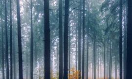 薰衣草精油祛疤方法