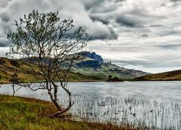 凤梨和菠萝有区别吗
