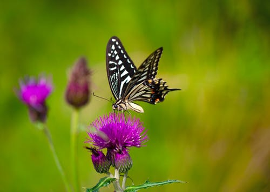 夏季美白祛斑食物推荐