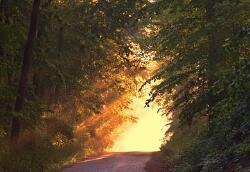 童嵩珍于论坛作性心理学报告 开拓泌尿生殖诊疗新思路