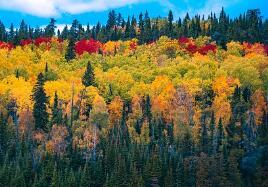 夏日饮一杯绿汁,有益身体又好喝!