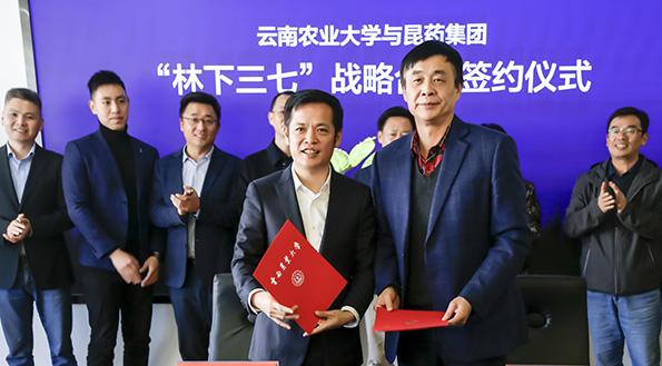 昆藥集團與云南農業大學、瀾滄田豐林下三七項目戰略合作簽約