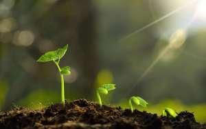 纳豆红曲以及这些植物,改善血脂异常有一手