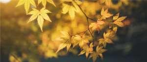 防秋燥,先潤肺,秋季養肺可服仲景麥味地黃丸