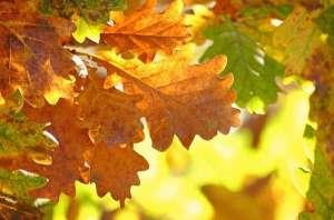 秋分一到,昼夜平分?面对这5种心血管疾病,劝你秋天做好4件事